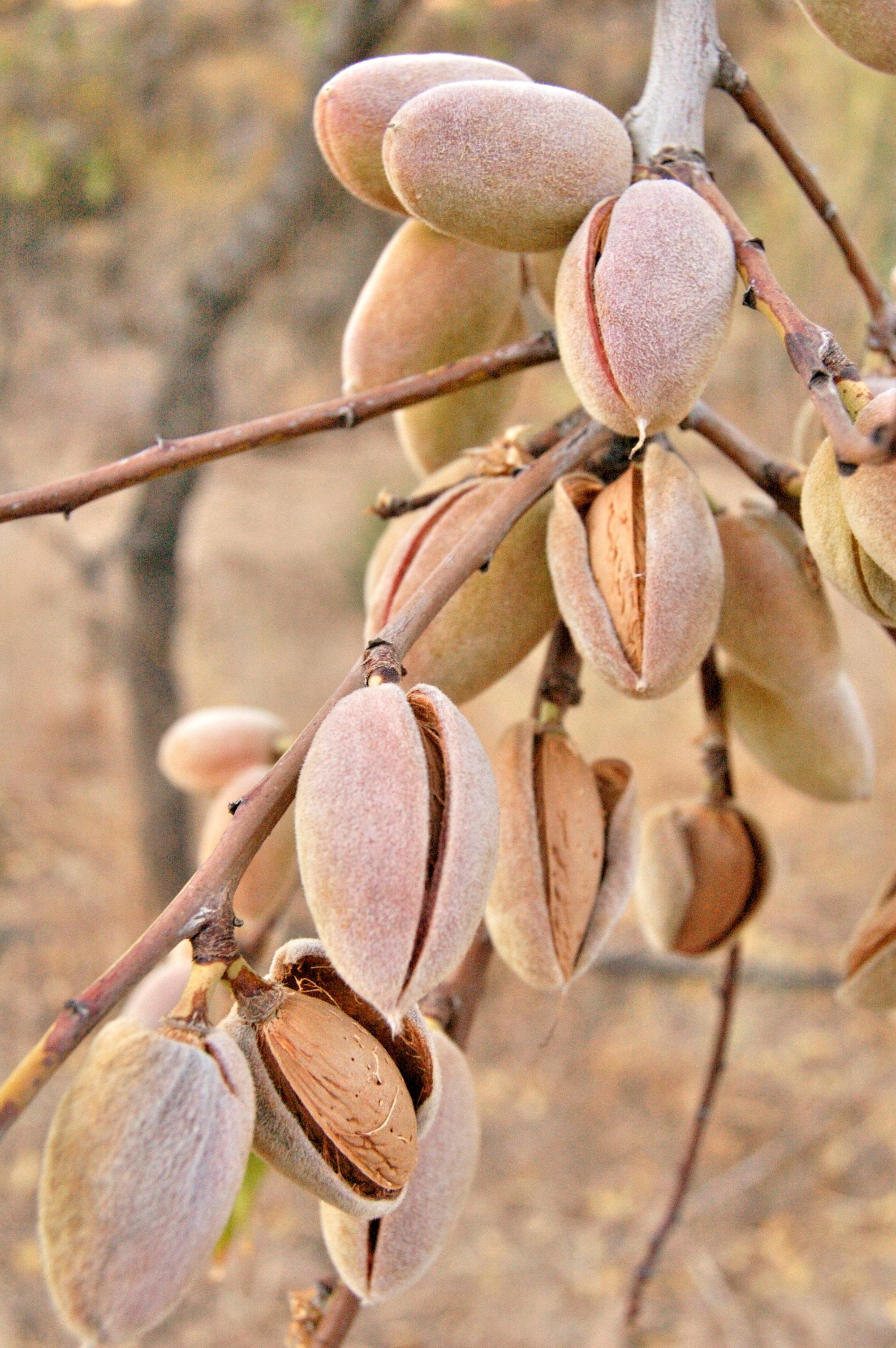Almonds are invaluable…